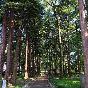 グリムの森